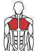 Træningsmaskiner efter muskelgrupper
